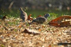 Couples adorables d'animal d'oiseau sur le champ naturel brun avec le fond de tache floue photos stock