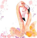 Couples affectueux d'aquarelle des flamants roses Image libre de droits