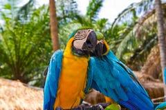 Couples affectueux d'oiseau Images stock