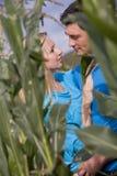 Couples affectueux dans le domaine de maïs Images libres de droits
