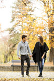 Couples affectueux en parc d'automne Images stock