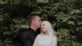 Couples affectueux heureux se dorant dans les branches d'un buisson vert banque de vidéos
