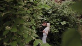 Couples affectueux heureux se dorant dans les branches d'un buisson vert clips vidéos