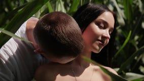 Couples affectueux se tenant dans un domaine de maïs étreignant et embrassant clips vidéos