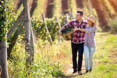 Couples appréciant dans la marche par le vignoble Photo libre de droits