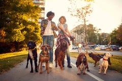 Couples appréciant dans la promenade avec des chiens photographie stock