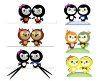 Couples Birds Stock Images