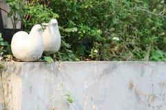 Couples birds Stock Photo
