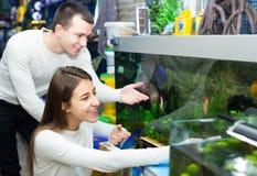 Couples choisissant des poissons d'aquarium Photo libre de droits