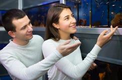 Couples choisissant des poissons d'aquarium Image stock