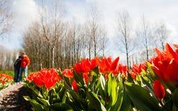 Couples contre des tulipes de Hollandse Photographie stock