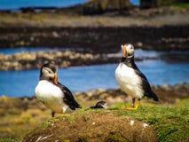 Couples d'oiseau à leur nid photo libre de droits