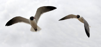 Couples d'oiseau Image libre de droits