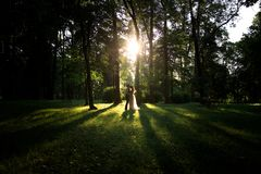 Couples dans l'amour au coucher du soleil dans la forêt Photos libres de droits