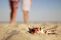 Couples dans l'amour avec des coquillages sur le rivage de la mer Photos libres de droits