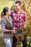 Couples dans l'amour dans le vignoble, saison de la récolte de raisin Photographie stock
