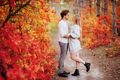 Couples dans l'amour dans des feuilles d'automne photo stock