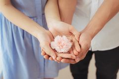 Couples dans l'amour L'homme et la femme remettent la fleur rose Photographie stock libre de droits