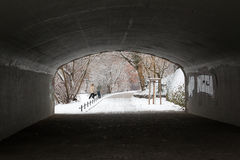 Couples dans l'amour jouant avec un chien dans la neige Image libre de droits