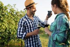 Couples dans le vignoble avant la moisson Photographie stock libre de droits