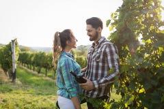 Couples dans le vignoble avant la moisson Image libre de droits