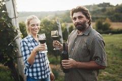 Couples dans le vignoble avant la moisson Photos libres de droits