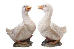Couples de canard Image stock