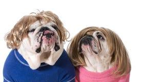 Couples de chien Images stock
