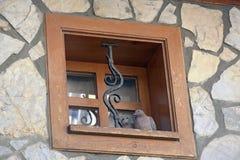 Couples de colombe dans une fenêtre en bois Photo libre de droits