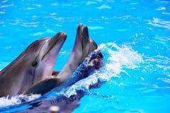 Couples de dauphin dans l'eau bleue. Photo stock