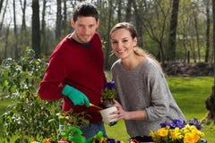 Couples de jardinier au travail image libre de droits
