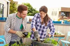 Couples de métis plantant le jardin de dessus de toit ensemble Photos libres de droits