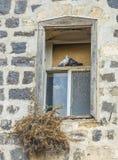 Couples de pigeon sur la belle fenêtre traditionnelle Photos stock