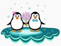 Couples de pingouin Image libre de droits