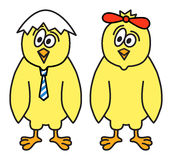 Couples de poulets Image stock