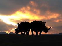 Couples de rhinocéros au coucher du soleil Images libres de droits