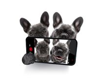 Couples de selfie de chiens Photos stock
