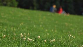 Couples Defocused dans des vêtements bleus et rouges ayant le pique-nique sur l'herbe dans le parc de ville tir de bokeh du fond  clips vidéos