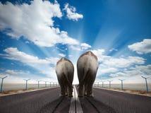 Couples des éléphants Photo stock