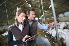 Couples des agriculteurs avec le comprimé dans la grange Image libre de droits