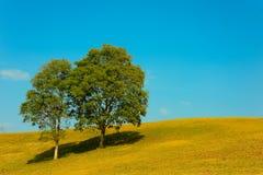 Couples des arbres avec l'herbe d'or et le ciel bleu d'espace libre Photo libre de droits