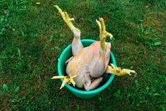 Couples des carcasses de poulets avec les griffes jaunes placées dans le seau vert sur l'herbe verte images stock