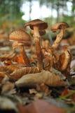 Couples des champignons sur l'arbre mort Images stock