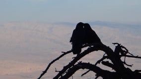 Couples des corbeaux Images libres de droits