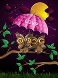 Couples des hiboux sur la branche sous la pleine lune Images libres de droits