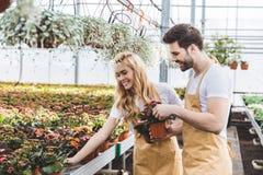 Couples des jardiniers arrangeant des pots avec des fleurs images stock