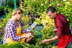Couples des jardiniers au travail sur une plantation photographie stock libre de droits