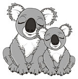 Couples des koala gris Photos stock