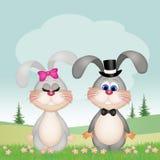 Couples des lapins Images stock