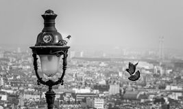 Couples des oiseaux à Paris Photos stock